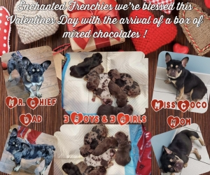 Valentine-Puppies-2-14-20